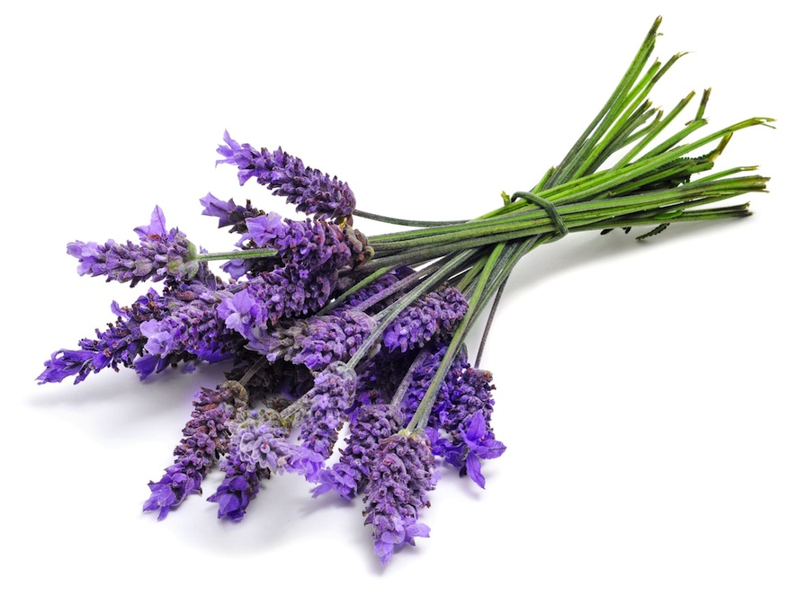 Chemical composition, antischistosomal and cytotoxic effects of the essential oil of Lavandula angustifolia grown in Southeastern Brazil - ScienceDirect