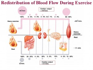 redistributionofbloodflow